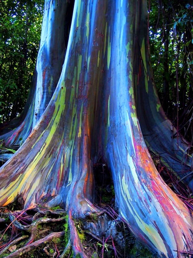 Stay green in the afterlife | Be a Eucalyptus tree!