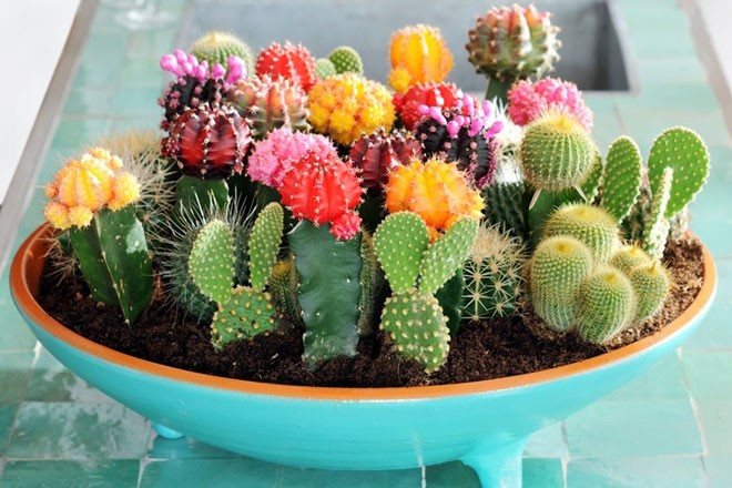 Cactus Montreal | Sale at UQAM!