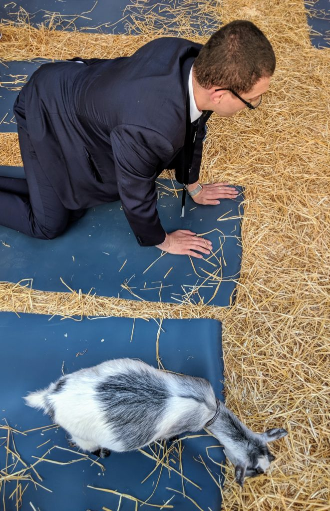 Business man getting past the bottom line with goat yoga at C2 Montreal